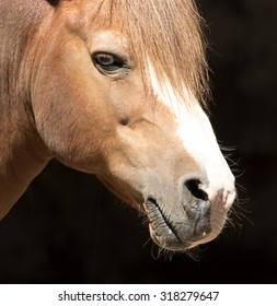 Portrait of a horse at the zoo
