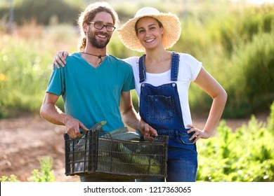 Portrait of horticulturist young couple looking at camera while holding fresh vegetables in crate in the garden.