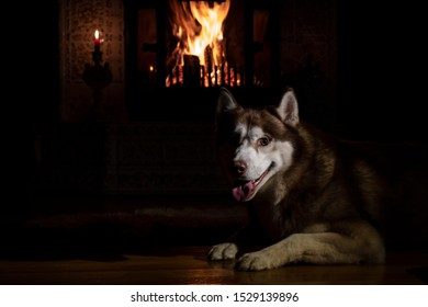 Portrait husky dog in night room by the burning fireplace and candles. Gloom lit by reflections from burning logs. Cozy interior in winter evening.