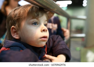 Portrait of interested kid in the zoo