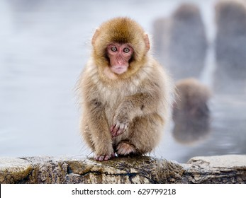 Snow Monkey Hd Stock Images Shutterstock