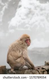 Portrait of Japanese Snow Monkey Macaque bathing in natural outdoor hot spring while snowing in winter season, Jigokudani Monkey Park, Nagano, Japan