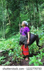 portrait  karen  tribe in the middle of the forest.  Karen life on the mountain.