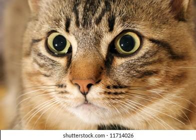 Portrait of a kitten close up
