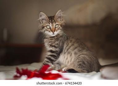 portrait of kitten in interior