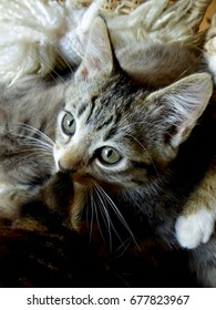 portrait of kitten with its nose at the ear of its sibling, another sibling's paw on its shoulder