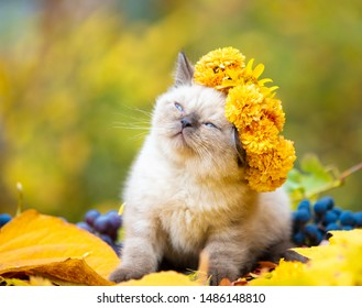 Portrait of a kitten outdoors in autumn. Cat crowned flower chaplet and sitting on fallen yellow leaves