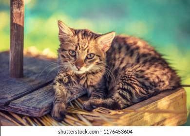 Portrait of kitten outdoors in the garden
