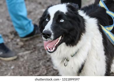 portrait of Laika