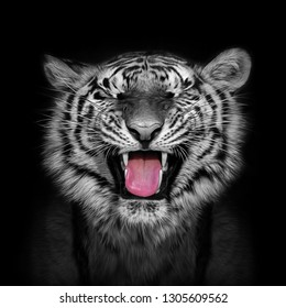 Portrait of a laughing tiger