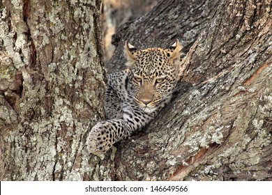 Hidden Animals Images Stock Photos Vectors Shutterstock
