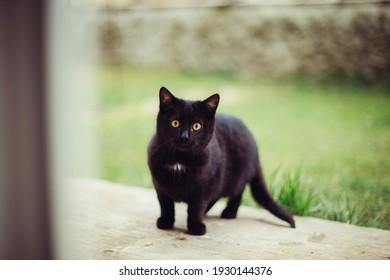 Portrait einer kleinen schwarzen Katze