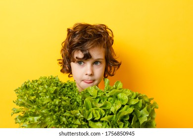 Portrait of little boy standing isolated on yellow background and enjoying delicious lettuce while looking at camera. Concept of healthy eating