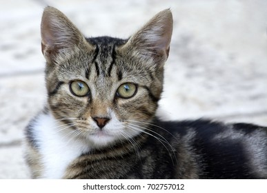 Portrait of a little cat