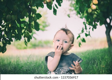 portrait of a little child eating plum in a garden under plum tree