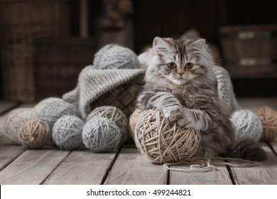 Portrait of little fluffy kitten with a ball of knitting on the old abandoned attic