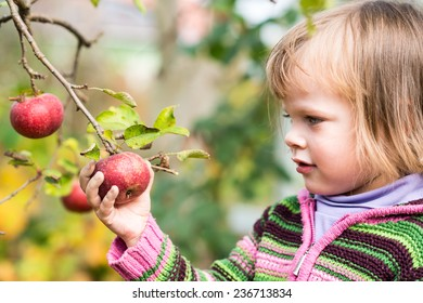 Portrait of little girl picking an apple from the tree