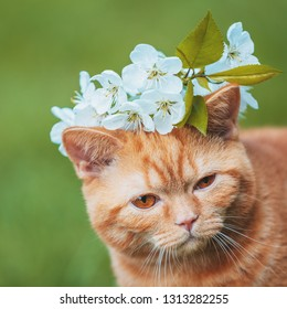 Portrait of a little kitten with cherry flowers on the head.