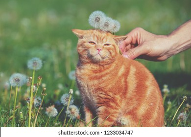 Portrait of a little kitten in the dandelion field among blowballs. Cat enjoying spring