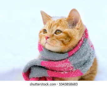 Portrait of a little kitten wearing knitted scarf outdoors in winter