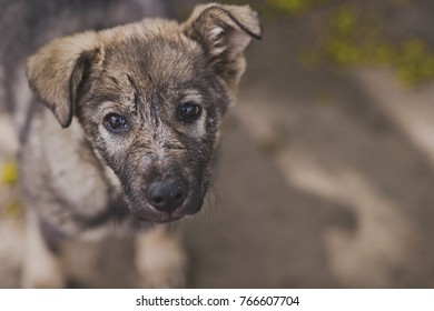 Portrait of a little lost puppy of a gray color.