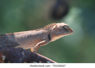 Portrait of a lizard holding on the old rusty metal bar.