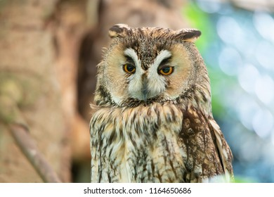 portrait of a long eared owl on a soft colorful bokeh background