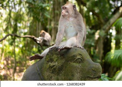 Portrait of a Long-Tailed Monkey in the Sacred Monkey Forest in Ubud, Bali, Indonesia
