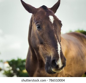 portrait of lovely mare in the field