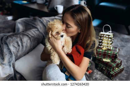 Portrait of loving and careful pet owner. Young lady hugging and kissing small maltipoo puppy with tiny black nose and curved tail. Sitting on comfortable grey sofa. Spending time playing together .