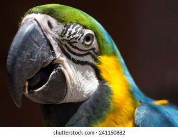 Portrait of a macaw bird