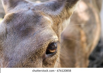 Portrait of majestic powerful adult deer stag in zoo