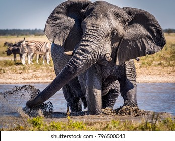 Portrait of a male elephant splashing around in a waterhole in Etosha-Nationalpark, Namibia - Shutterstock ID 796500043