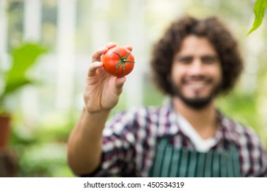 Portrait of male gardener showing fresh tomato at grenhouse