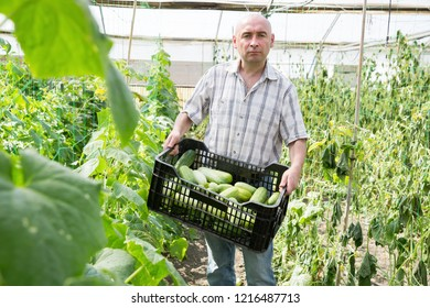 Portrait of  male horticulturist standing with crate of cucumbers in greenhouse