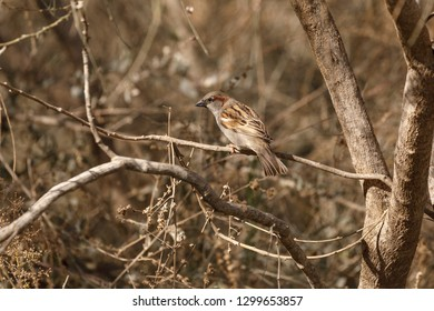 Portrait of male sparrow who is slipping on tree