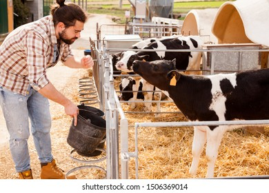 Portrait of man farmer with bucket  feeding cows at the cow farm