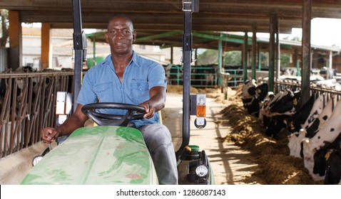 Portrait of man proffesional farmer  is sitting in the car near cows at the cow farm