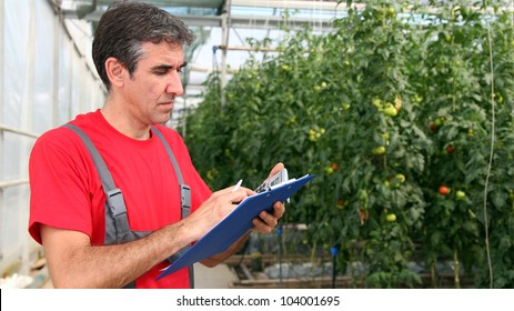 Portrait of a man at work in commercial greenhouse. Greenhouse produce. Food production. Tomato growing in greenhouse.