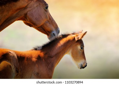 Portrait of mare and foal
