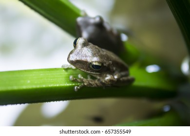 Portrait of mash green frog sitting in the water