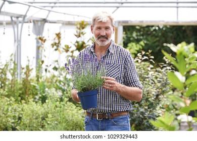Portrait Of Mature Man Choosing Plants At Garden Center