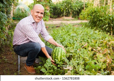 Portrait of mature man working in glasshouse, checking watermelon harvest