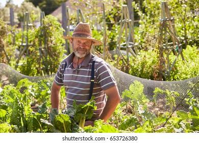 Portrait Of Mature Man Working On Community Allotment