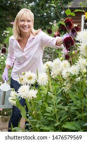 Portrait Of Mature Woman Watering Dahlia Flowers In Garden At Home