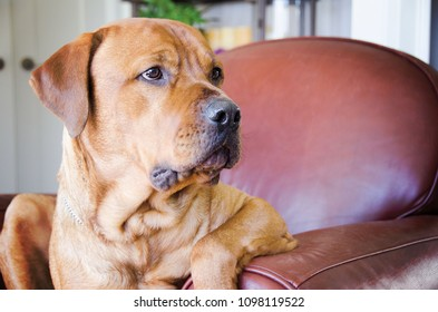 Portrait of a Mixed Breed dog