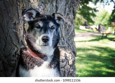 Portrait of a Mixed-Breed Dog