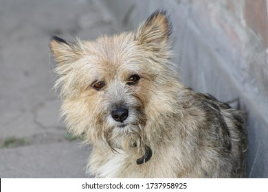 Portrait of a mongrel shaggy dog on a gray background