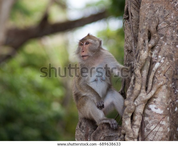 Portrait of a monkey on a branch in the forest