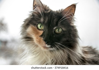 Portrait of a mottled cat with yellow-green eyes